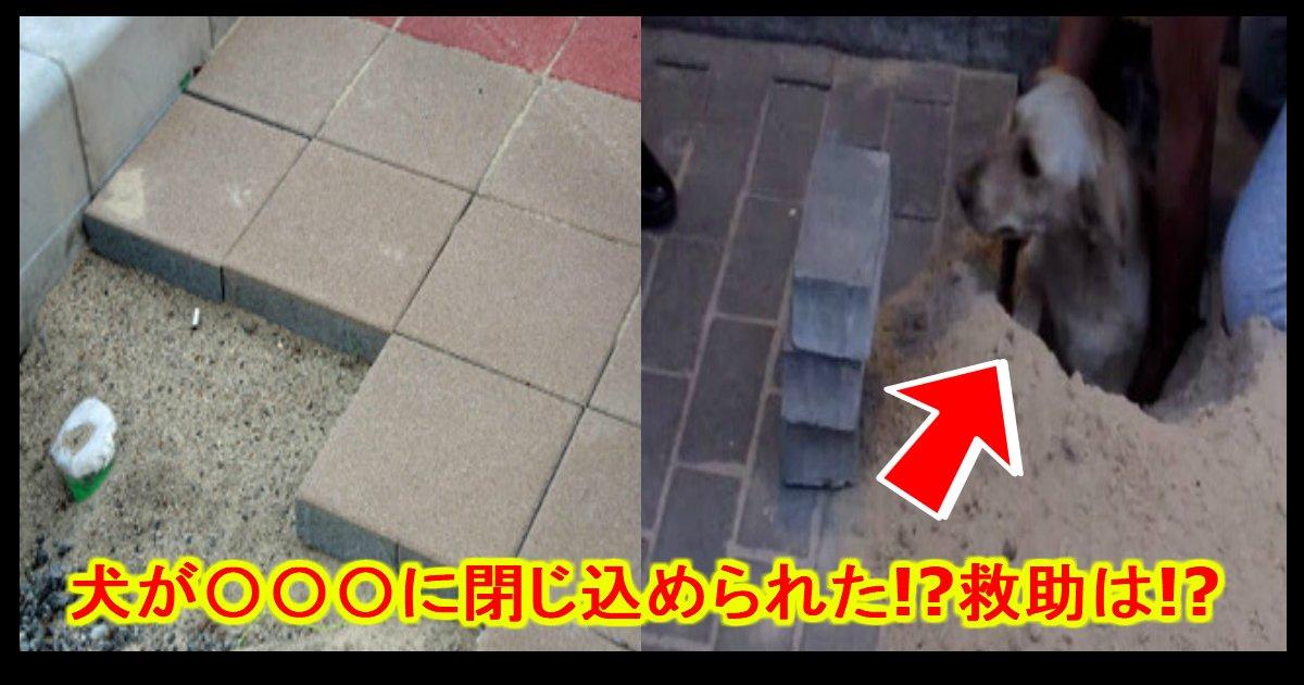 unnamed file 27 - 【ショック】地面ブロックにワンちゃんが閉じ込められた!?