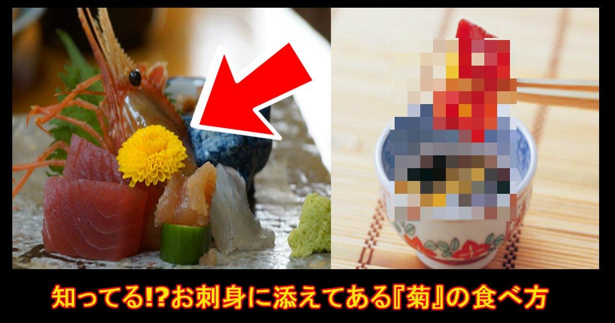 """unnamed file 55.jpg?resize=1200,630 - 『知っていたら凄い!』お刺身に添えられた""""菊の花""""どうやって食べるか知ってる!?"""