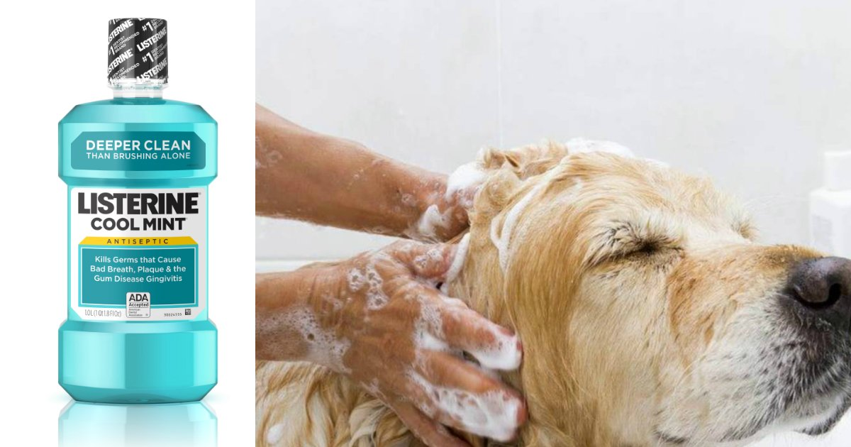 untitled 1 13 - Here Are 10 Unbelievable Hacks Of Listerine That You All Must Follow