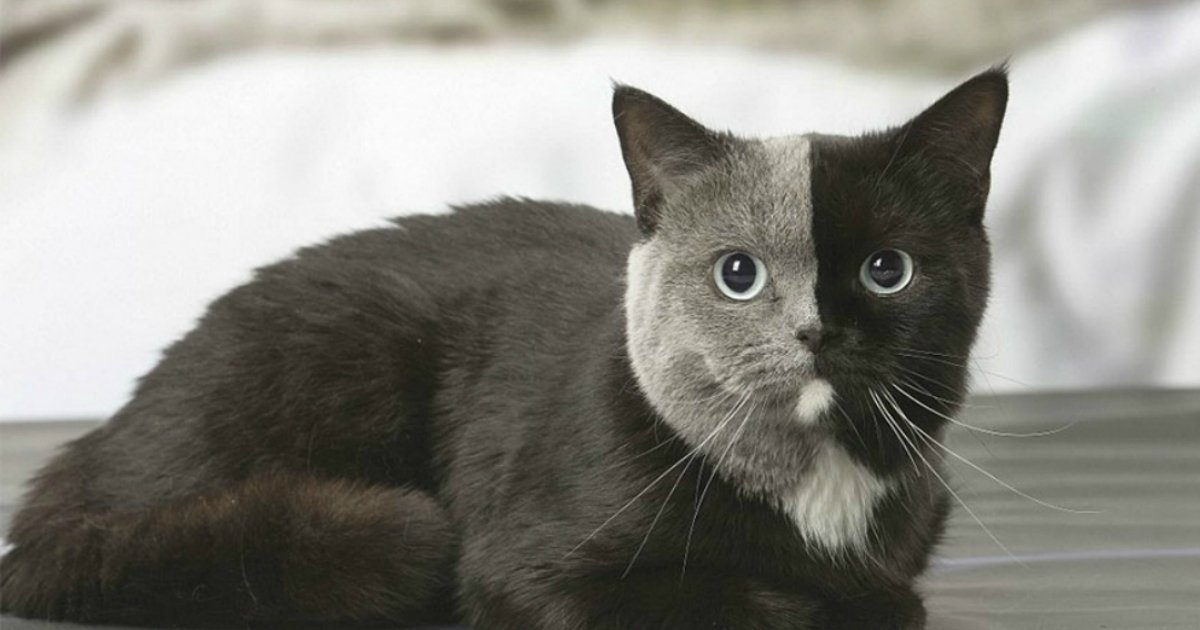 untitled 1 48.jpg?resize=1200,630 - You Can't Believe That This Adorable 'Two-faced' Cat From France Is REAL!