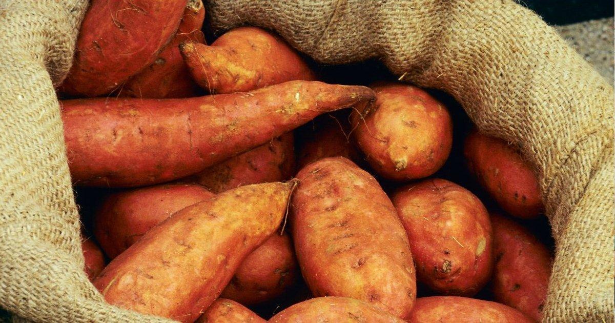 untitled 7.png?resize=1200,630 - Como a batata-doce resolve problemas estomacais
