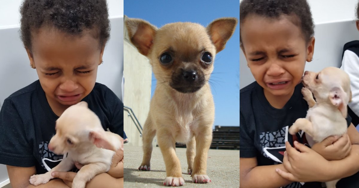 zayden.jpg?resize=300,169 - Little Boy Cries While Holding Baby Chihuahua, Then Tells His Mom Why