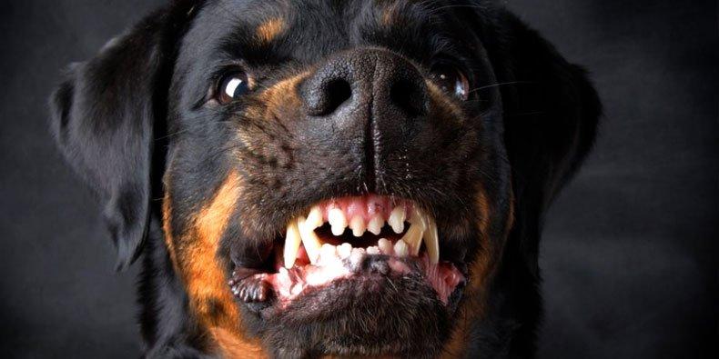 07160607038032 - Você sabe se defender de um ataque de cachorro?