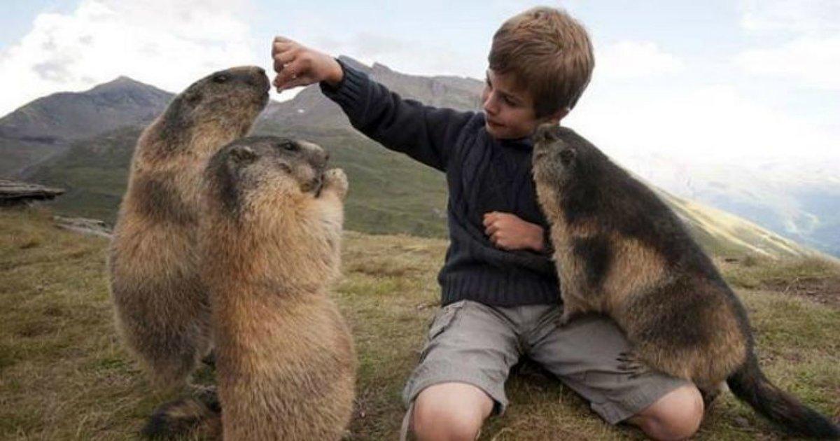 1 195 - 매년 알프스에 여행가서 동물 '마멋'과 친구가 된 소년