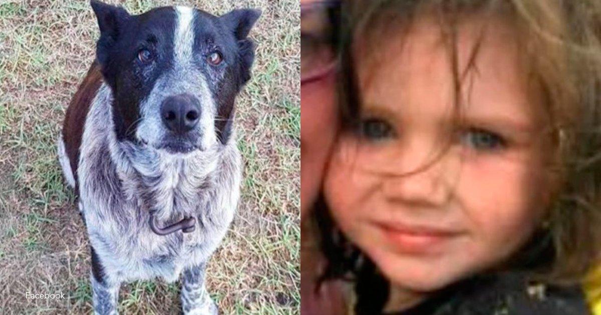 1 perro.png?resize=1200,630 - Este perro, aunque es ciego y sordo, logró rescatar a una niña perdida de tres años