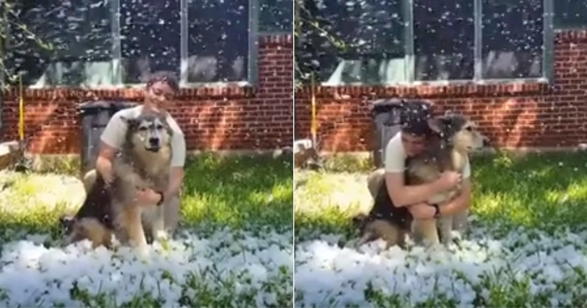 2 208.jpg?resize=412,232 - Owner Fulfills Her Dog's Last Wish To Play In Snow