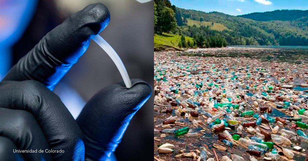 2 coverr.png?resize=1200,630 - Crearon un sustituto del plástico que puede reciclarse de forma infinita