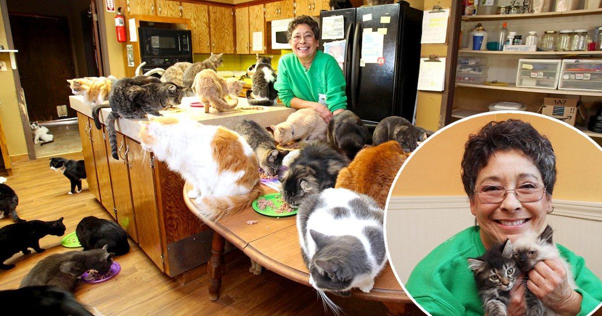 2ec8db8eb84ac 2.jpg?resize=1200,630 - A rainha dos gatos: Mulher transformou sua casa em um abrigo para 1.100 gatinhos abandonados