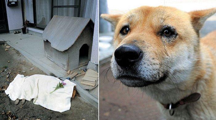 4 29 - '후쿠시마 원전 사고' 이후 여전히 주인 기다리는 동물들 사진에 담은 일본 작가