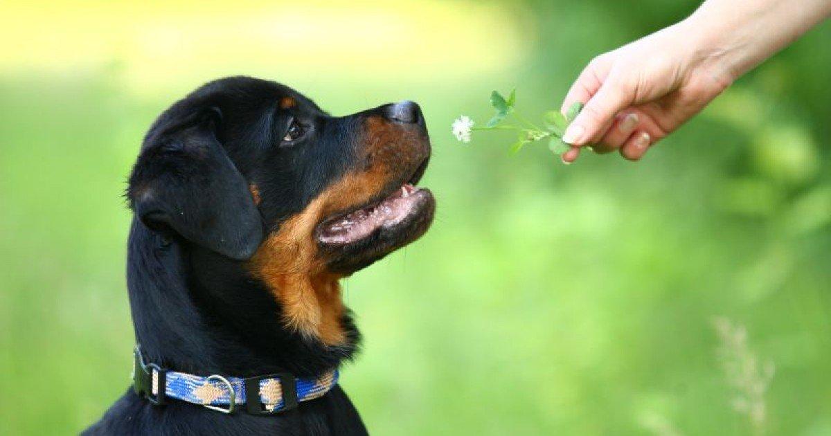 Resultado de imagem para cachorro comendo