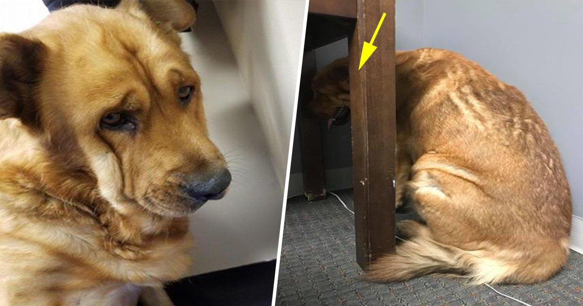 4ec8db8eb84ac 2 - Ce chien dévasté par la mort de son maître a finalement retrouvé le moral.