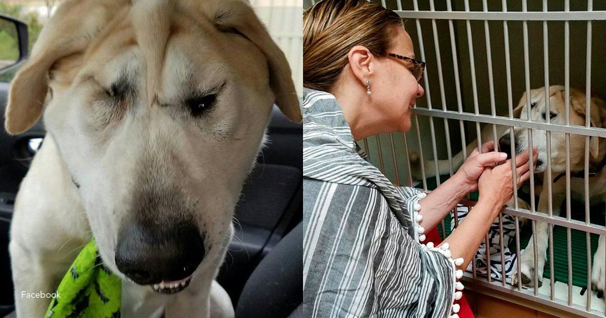 5 perro.png?resize=1200,630 - Un perro que nació con malformación por fin encuentra un hogar luego de muchos años