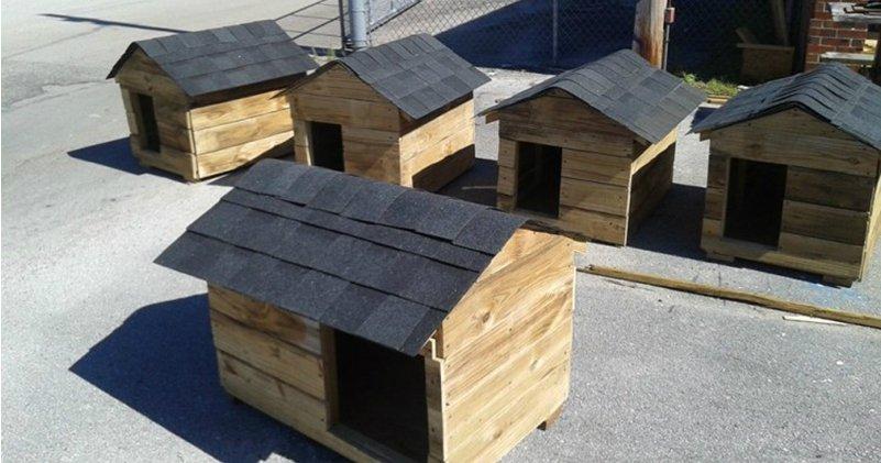 6696f302d9f79f753756fa438bc2bb6a1.jpg?resize=1200,630 - Professor ensina alunos a construírem casas para cachorros para doação