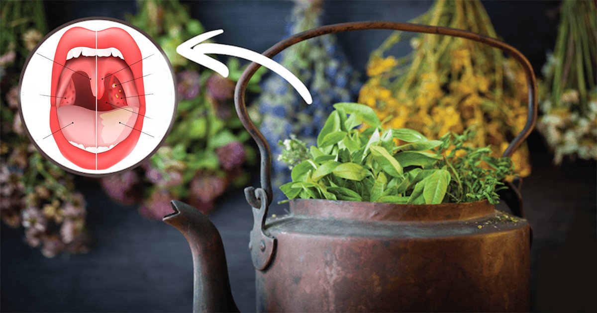 6ec8db8eb84ac 1.jpg?resize=412,232 - L'herbe qui peut aider à traiter la sinusite, la grippe et même le cancer