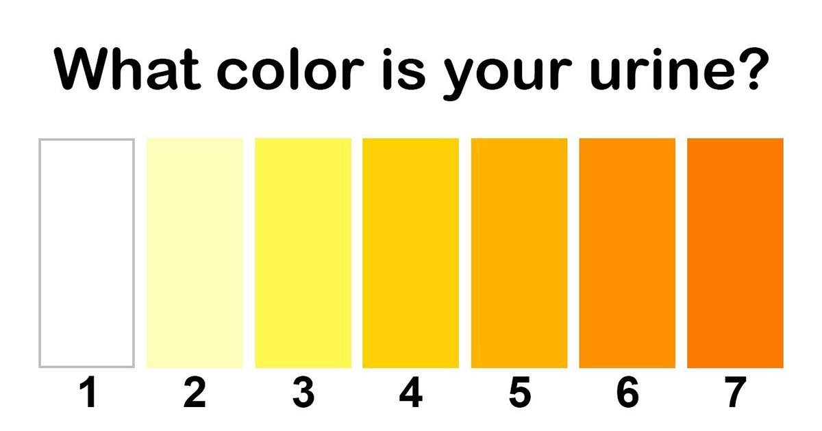 6ec8db8eb84ac 3.jpg?resize=412,232 - The Color Of Your Urine Tells A Lot About Your Health