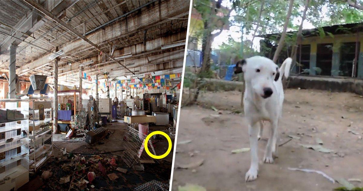 7ec8db8eb84ac 1.jpg?resize=412,232 - Un chien handicapé trouvé dans une maison abandonnée doit sa vie à ses sauveteurs