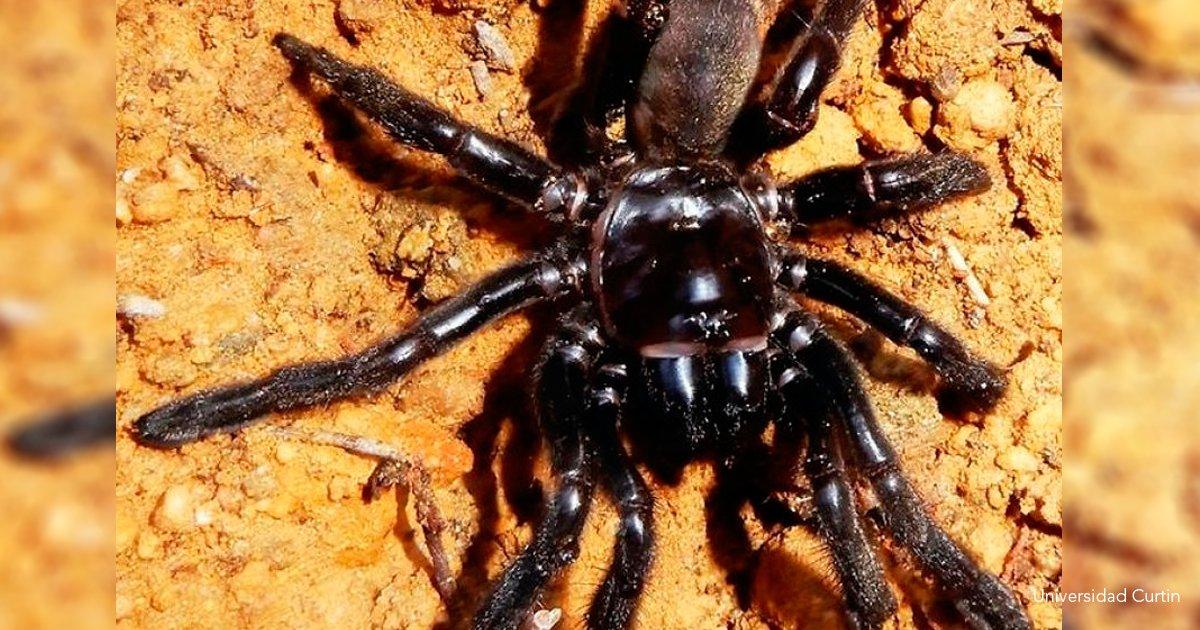 """9 arana.png?resize=1200,630 - A sus 43 años muere """"Número 16"""", la araña más vieja del mundo"""