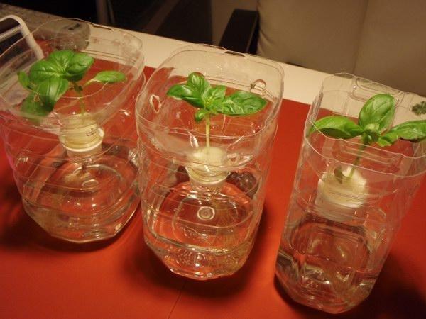 水耕栽培 ペットボトル에 대한 이미지 검색결과