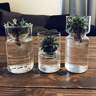 水耕栽培 おしゃれ에 대한 이미지 검색결과