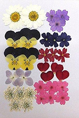 押し花에 대한 이미지 검색결과