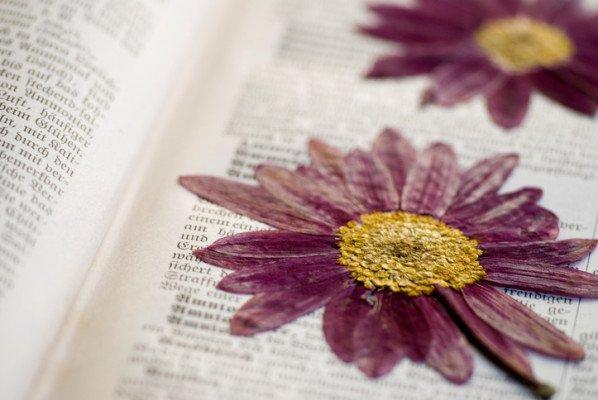 押し花 에 대한 이미지 검색결과