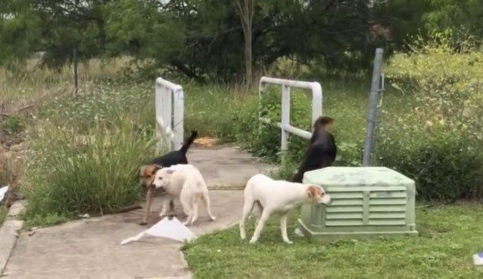 mulher-confrontada-abandonada-cães-texas-41