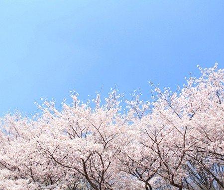 春에 대한 이미지 검색결과