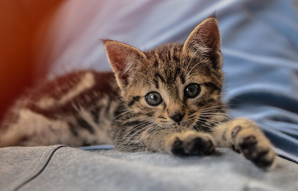 kitten pixabay에 대한 이미지 검색결과