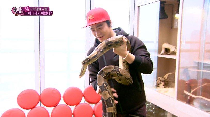 아웃사이더 보아뱀에 대한 이미지 검색결과
