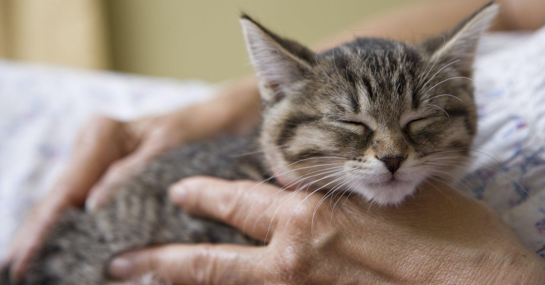 a.jpeg?resize=412,232 - Une clinique vétérinaire irlandaise a mis une offre d'emploi pour la profession de 'câlineur de chat'