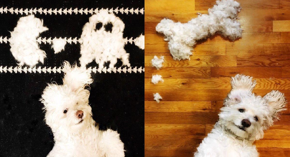 aa.png?resize=300,169 - 강아지 털로 만들어 낸 놀라운 상상력 (사진)