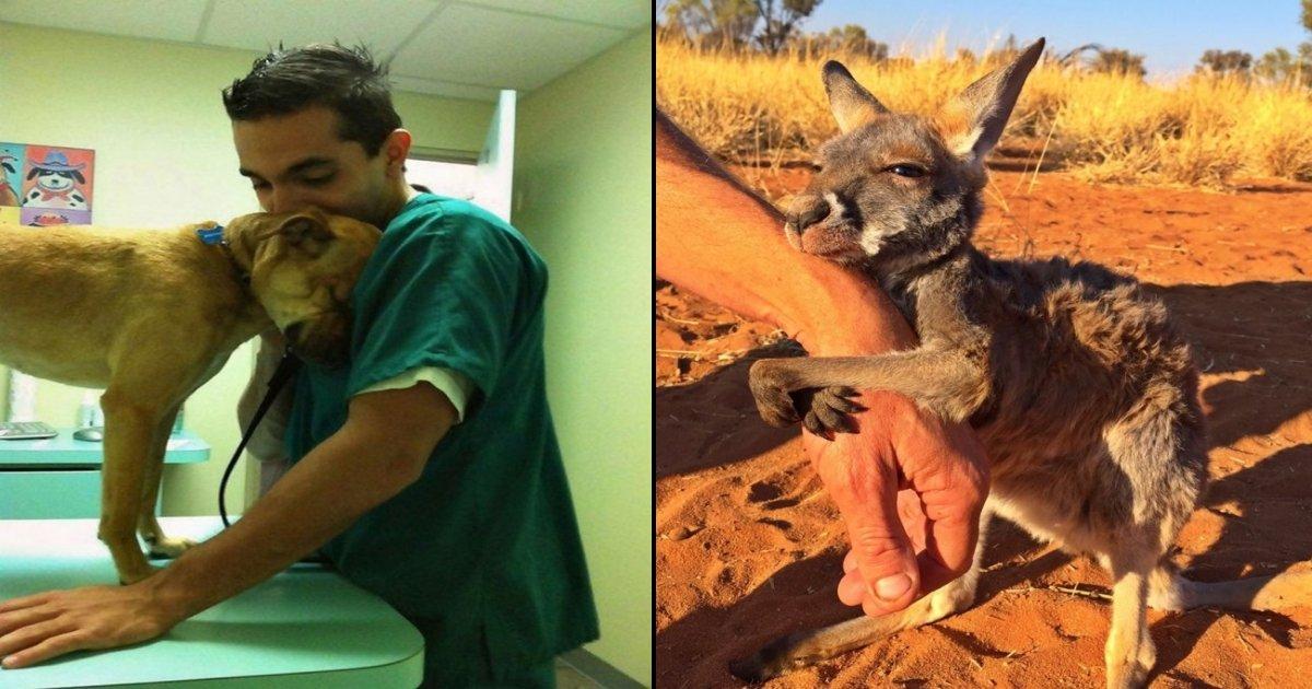 animal tn.jpg?resize=1200,630 - 12 animaux secourus montrent leur gratitude envers leurs sauveteurs.