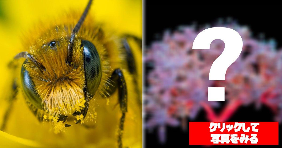 bees.jpg?resize=412,275 - 綺麗で不思議な花....これ『昆虫たちの視界を再現』したものなんです!