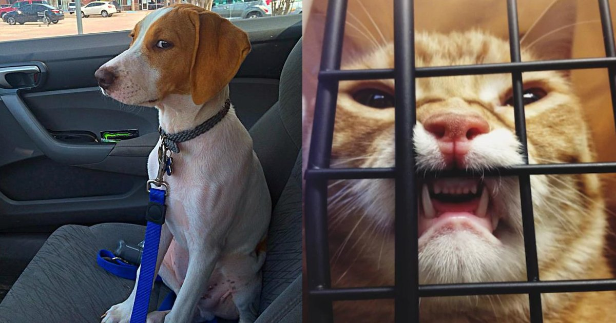 betrayed face.jpg?resize=412,232 - Hilarious Reactions of Pets When They Realized Their Humans Were Not To Be Trusted