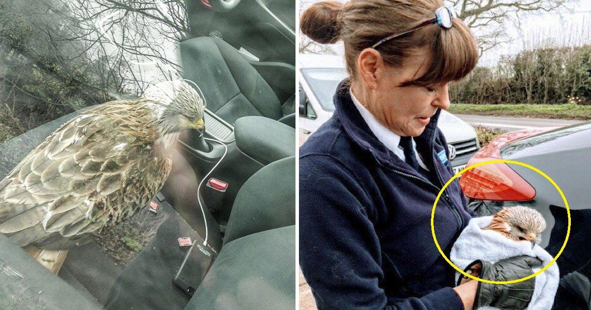 bird.jpg?resize=1200,630 - Il sauve un oiseau blessé trouvé sur le bord de la route, mais regrette vite sa décision!