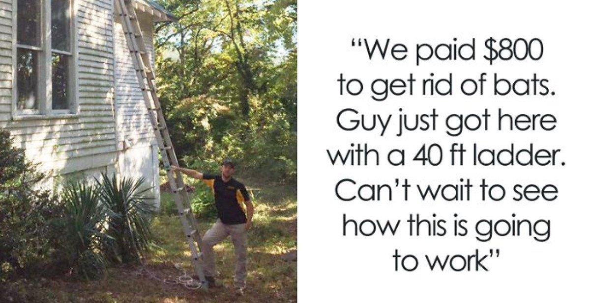 bt.jpg?resize=412,232 - Un gars engage des hommes chauve-souris pour évacuer son grenier de plus de 40 chauves-souris et documente l'ensemble de l'opération dans un fil Twitter hilarant