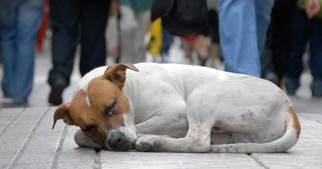 cao abandonado ve mundo e1444256081544.jpg?resize=300,169 - Mauá irá multar maus-tratos e abandono de animais