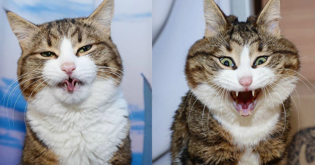 cat expression.jpg?resize=1200,630 - Handicapped Cat Is Taking Over The Internet With His Funny Facial Expressions