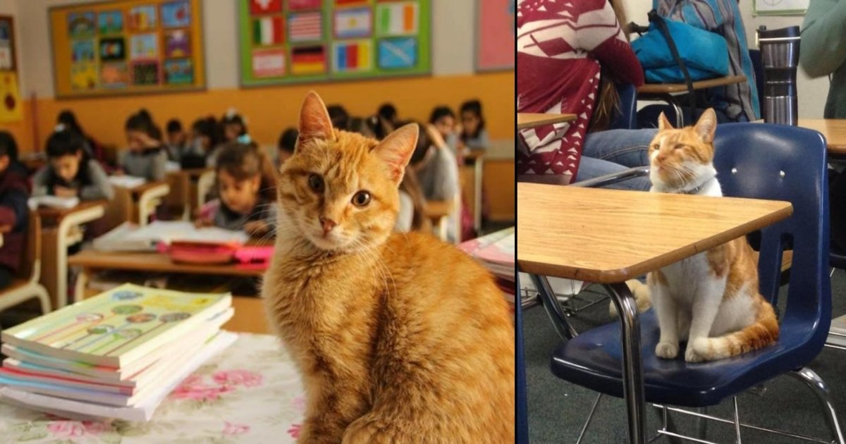 cat side - Stray Cat In Turkey Decides To Be Part Of A Third Grade Class