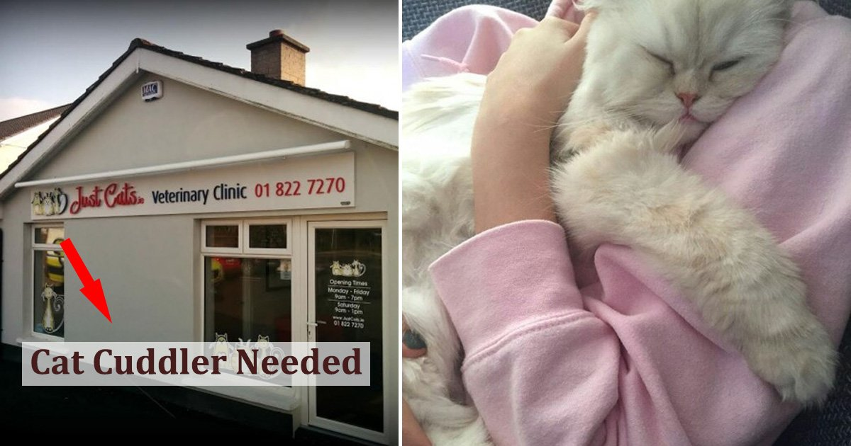 """cat.jpg?resize=412,232 - Une clinique vétérinaire en Irlande est à la recherche d'un """"câlineur de chats"""" professionnel"""