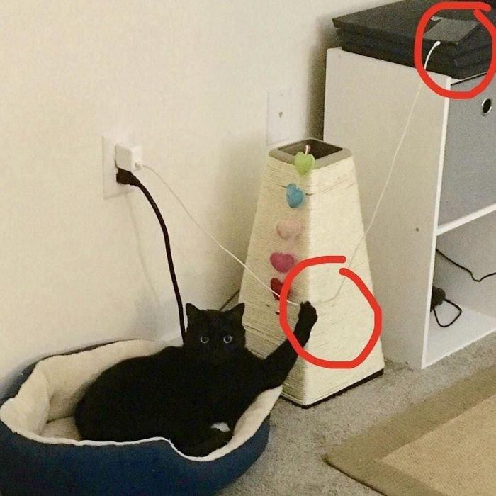chats-provoquant-menace-5