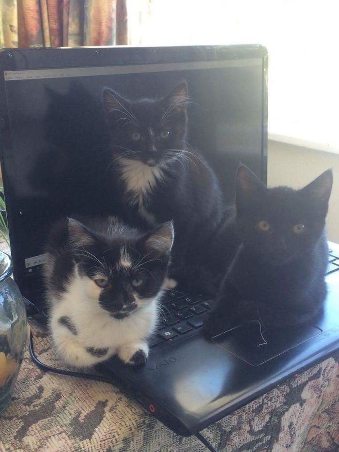 chats-causant-menace-8