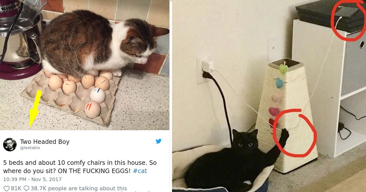 cats2.jpg?resize=1200,630 - These Hilarious Images That Prove Cats Are The Biggest Jerks
