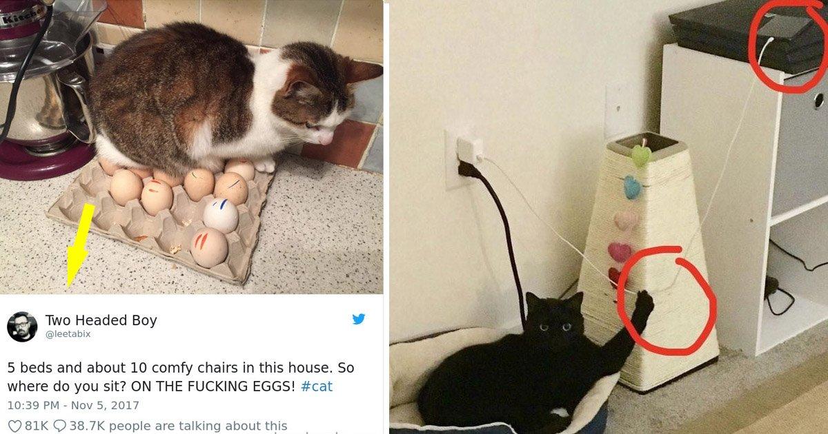 cats2.jpg?resize=1200,630 - Ces images hilarantes qui prouvent que les chats sont les plus grands des tyrans