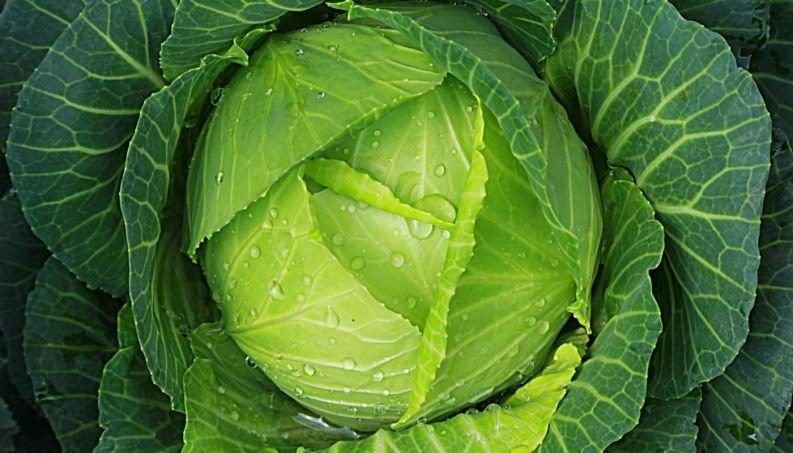 couve vegetal suco verde 116 400x800