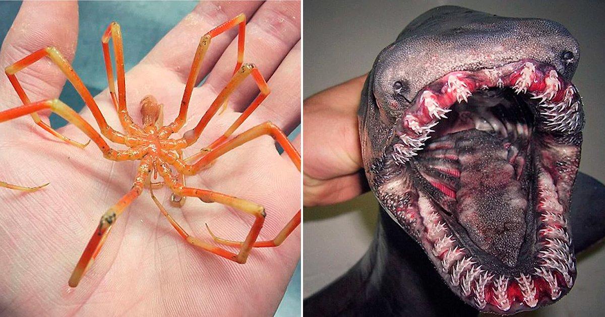 cover22bih.jpg?resize=1200,630 - 20 increíbles y perturbadoras criaturas y objetos hallados en la profundidad de los océanos que te sorprenderán