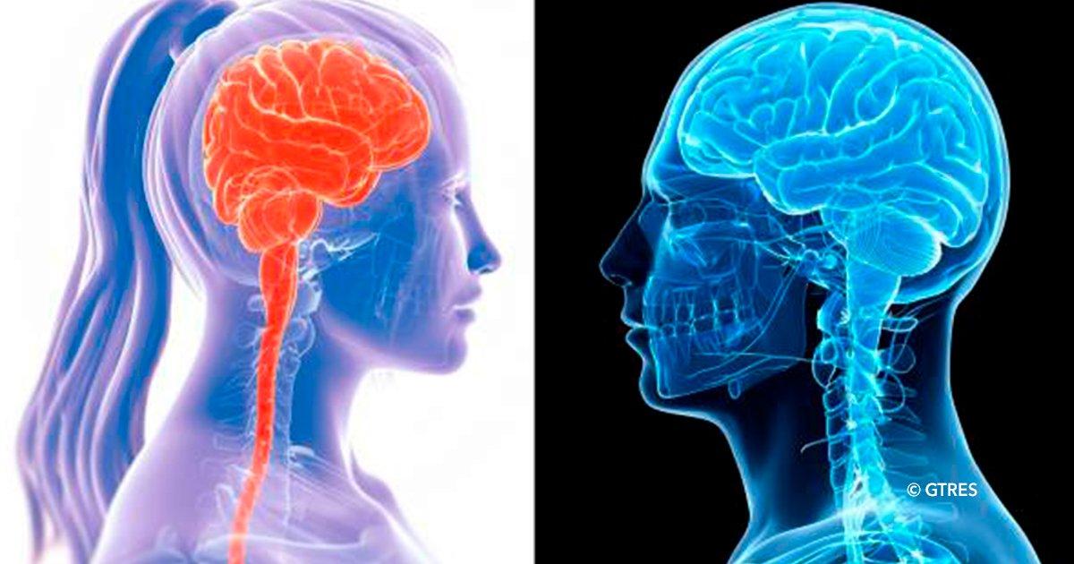 cover22cerb - Según la ciencia, las mujeres tienen cerebros más activos que los hombres