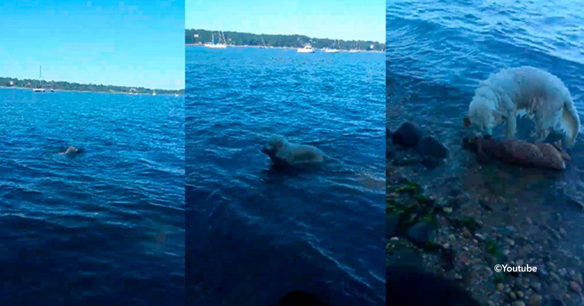 cover22ciervo.jpg?resize=1200,630 - La historia del perro que sacó un pesado bulto del agua, su heroica acción se ha hecho viral en las redes