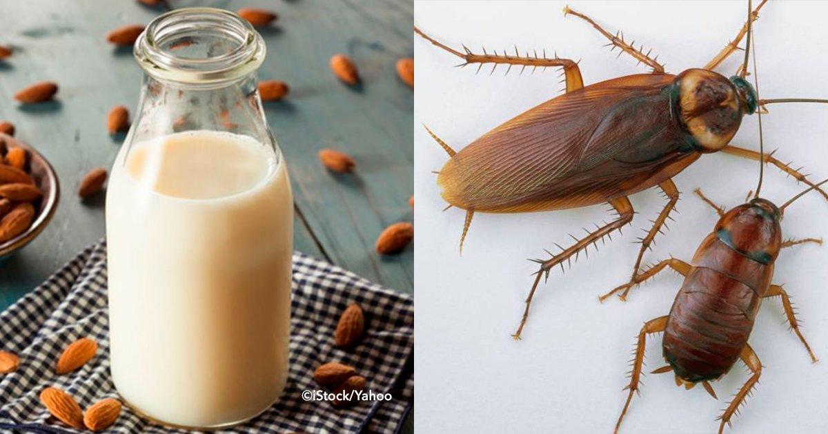 cover22cuca.jpg?resize=1200,630 - Investigadores revelaron que la leche de cucaracha sería el alimento del futuro