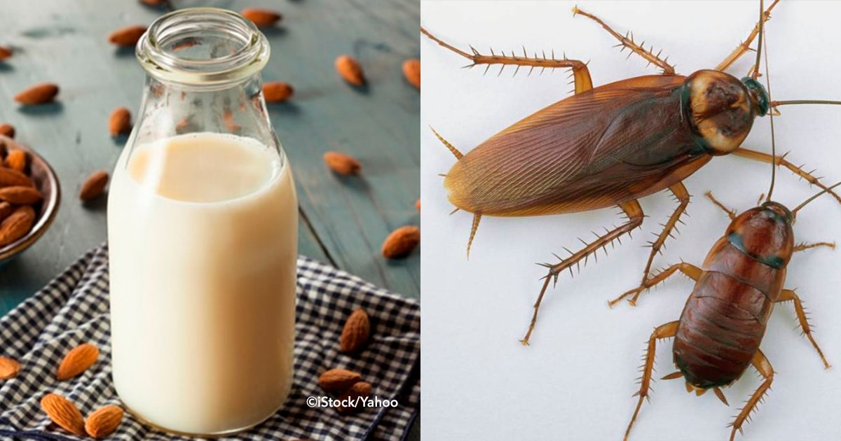 cover22cuca - Investigadores revelaron que la leche de cucaracha sería el alimento del futuro